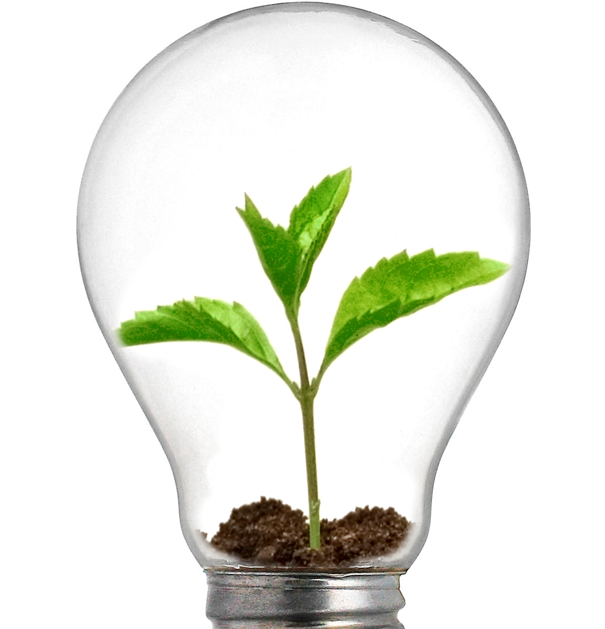 Sprout Lightbulb